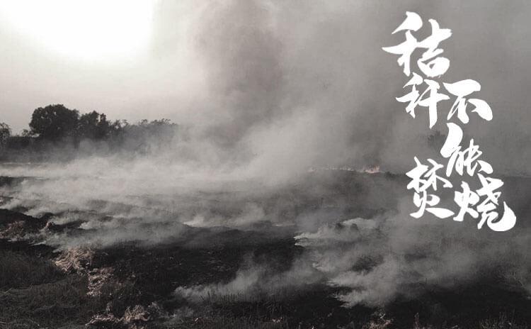 《秸秆不能烧》剧本杀资料_故事背景_角色简介_玩家点评_复盘解析